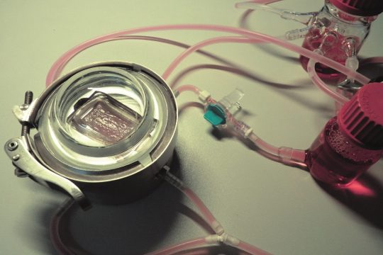 Bioreaktor mit roter Flüssigkeit