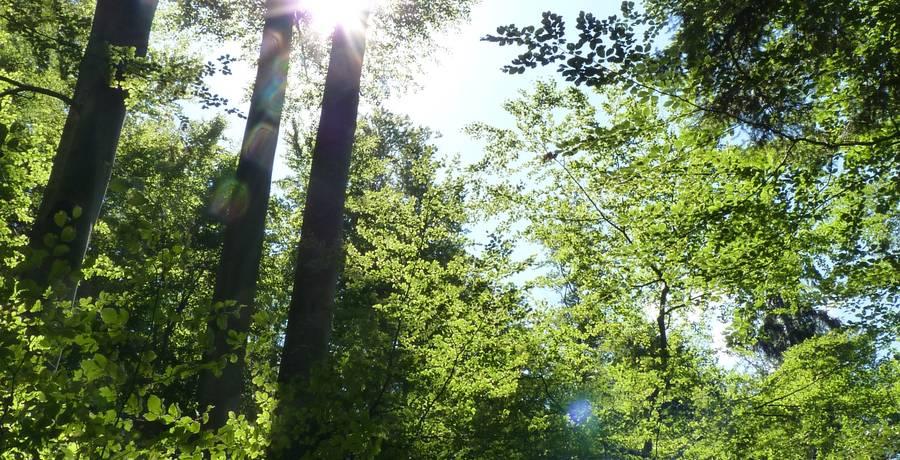 Die Sonne scheint auf ein Waldstück.